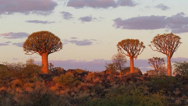 Namibia-Kalahari-00001