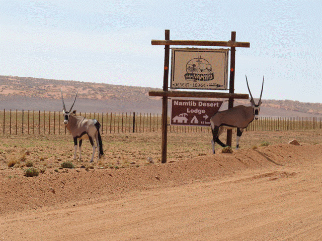 Namibia Kalahari 00003