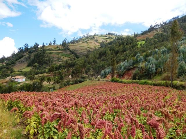 Peru Chachapoyas_und_Amazonas_07